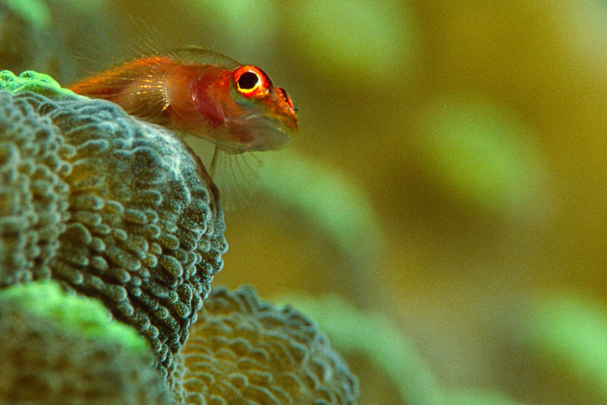 FISHES_2005_10_533